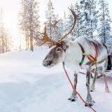 viaggio di gruppo organizzato norvegia popolo sami