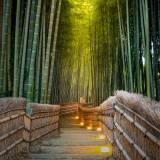 viaggio organizzato in giappone foresta di bambù kyoto