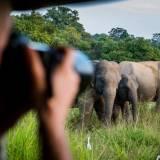 viaggio organizzato in sri lanka parco nazionale di yala