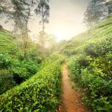 viaggio organizzato in sri lanka pidurutalagala
