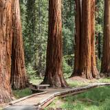 viaggio organizzato negli usa tuolumne grove of gian sequoia