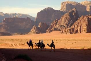 Cammelli nel Wadi Rum