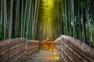 Foresta di Bamboo nei dintorni di Kyoto