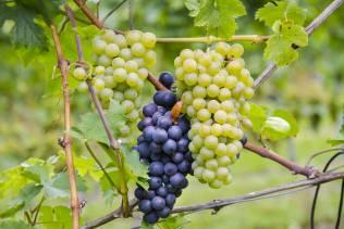 La via dei vini alsaziana
