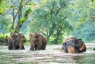 Thailandia: incontri ravvicinati.