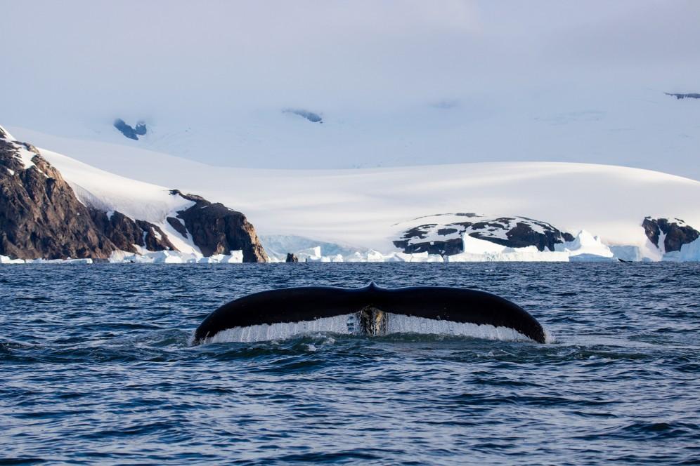 Balena Andenes