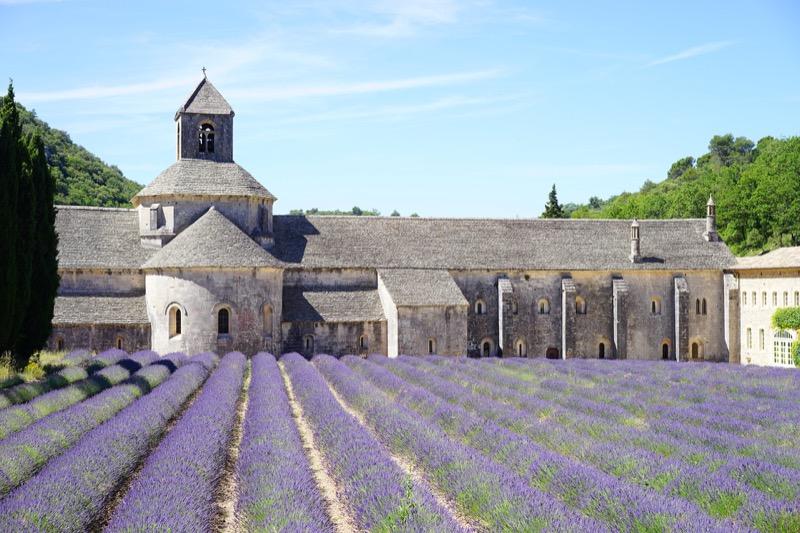 abbazia di Senaque lavanda